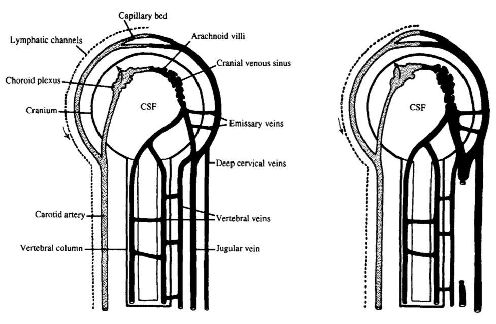 how to find jugular vein